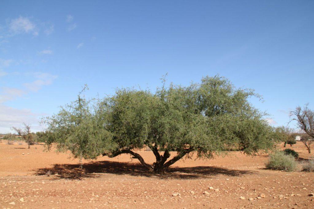 「モロッコの黄金」アルガンオイルの超 保湿力でオイル美容を