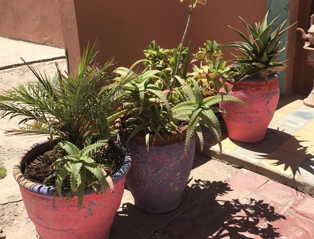 アルガンオイルで春の肌荒れ・乾燥・かゆみ対策